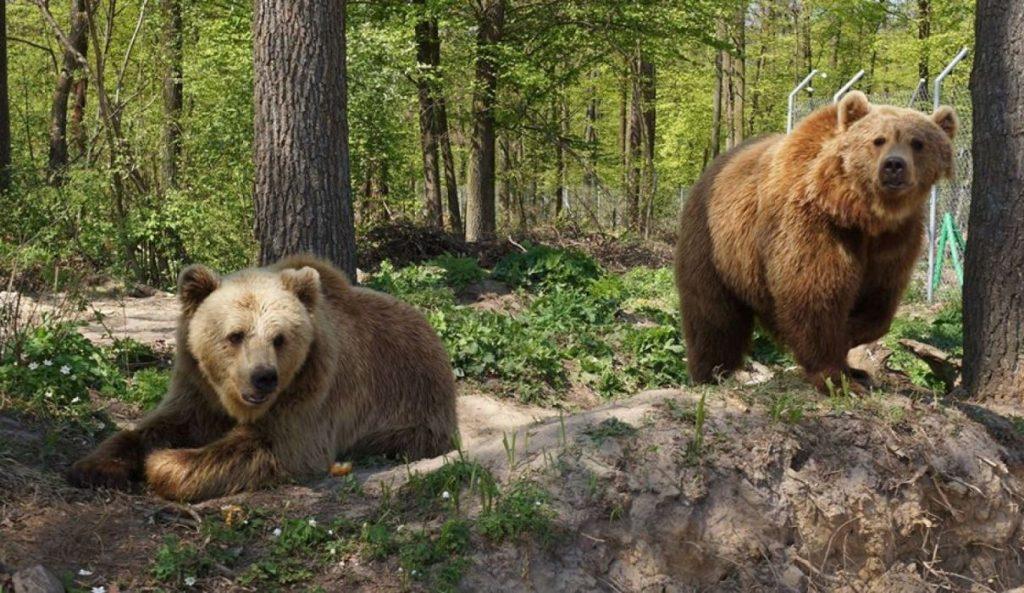 центр реабилитации бурых медведей