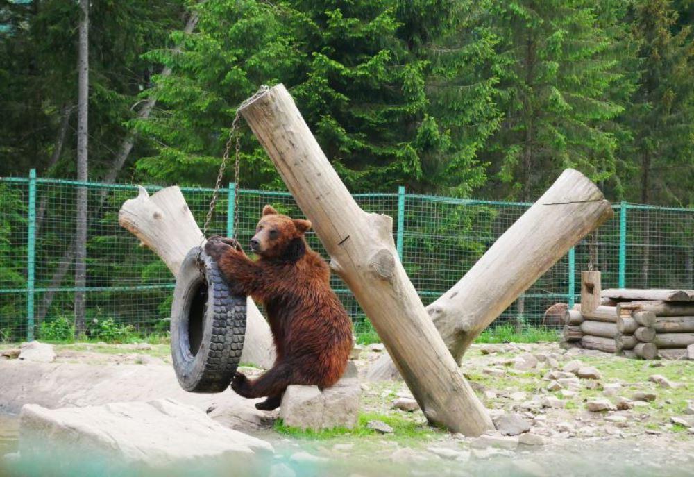 центр реабилитации бурых медведей в Карпатах